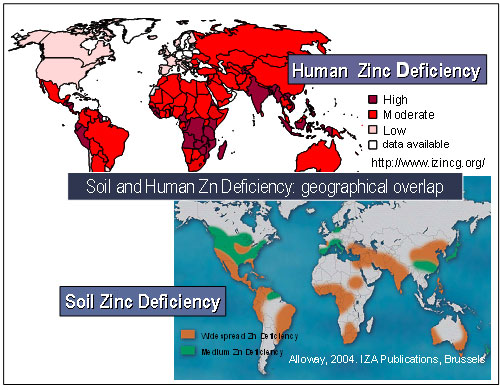 Zinc quotes like success for Soil zinc deficiency